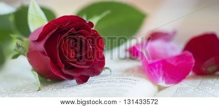 Red rose and petals - wedding banner with copy space