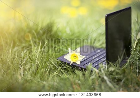 Website banner of a laptop with spring flower