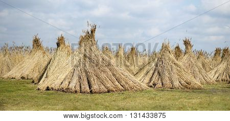 Natural building material - reed website banner