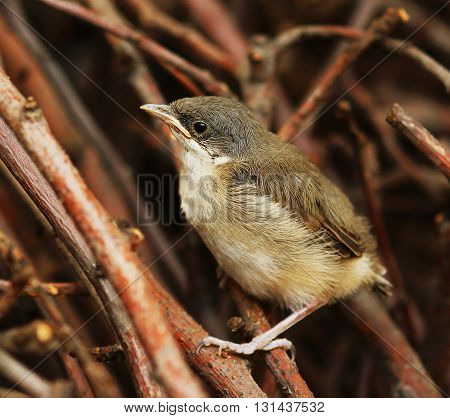 a nice and small bird on nature