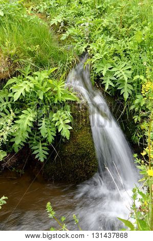 Small waterfall of a meter on a green bottom of vegetation.