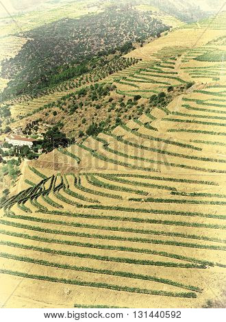 Vineyards on the Hills of Portugal Retro Image Filtered Style