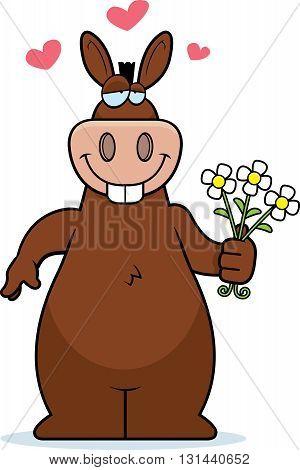Donkey Flowers