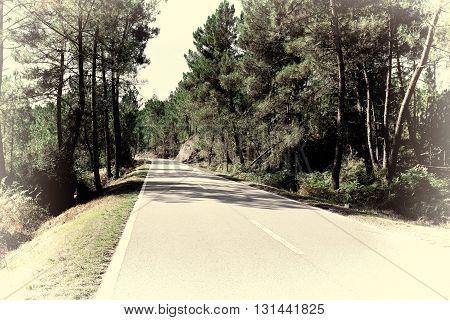 Forest Asphalt Road in Portugal Retro Image Filtered Style