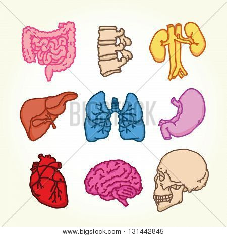 Human outline style organs isolated vector icons set