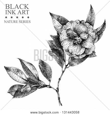 Illustration with flower camellia drawn by hand with black ink. Graphic drawing pointillism technique. Floral element for design