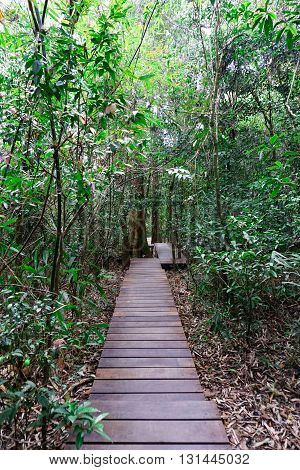 wooden pathway into the forest for ecotourism