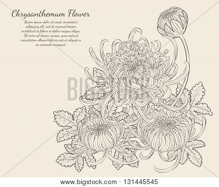 Chrysanthemum Flower from hand drawing.art and design use for tattoo.