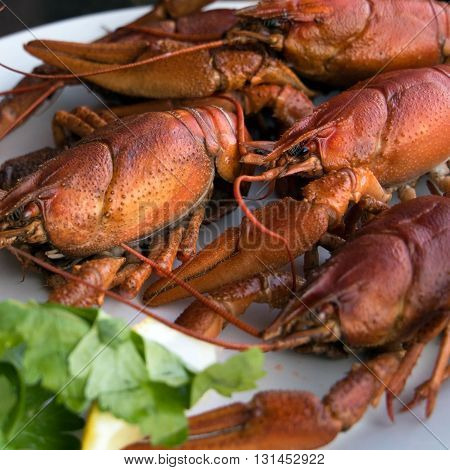 Fresh seafood with herb , Red boiled crawfish on a plate