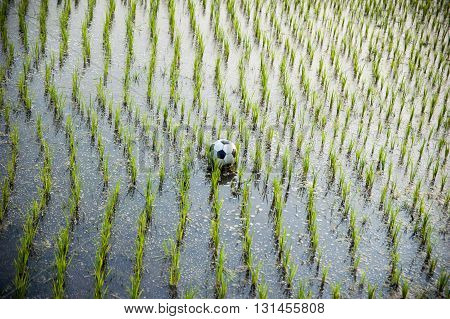Soccer ball on a rice field, West Bengal, India