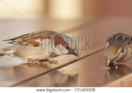 Sparrows Sitting On A Wooden Table, Near The Cafe, And Pecking At Crumbs On The Table.