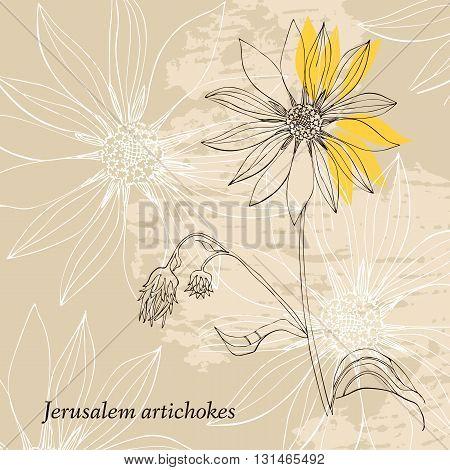 Floral card. Hand drawn Jerusalem artichokes flower. Vector illustration.