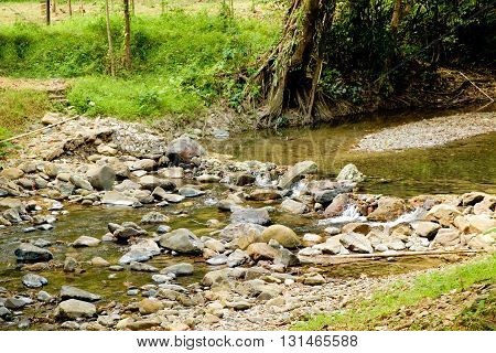 Mountain stream at the Khao Sok National Park Surat Thani Province Thailand. Soft focus.