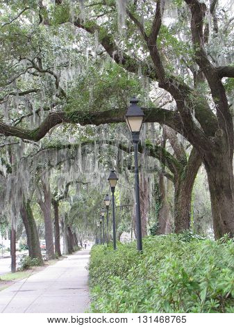 Oak-Lined Lampstands and Park Pathway in Savannah