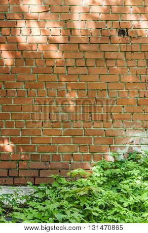red brick wall with patches of light from the sun and green grass at the foot of the wall and a piece of the curb