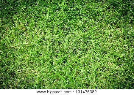 Green grass lawn. Green grass growing on the lawn.