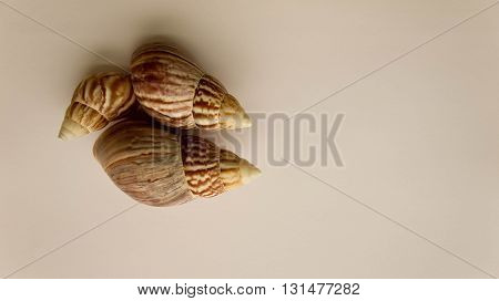 cockleshells, different colors, sea subject,   different colors of a background, cockleshell cone, three piece