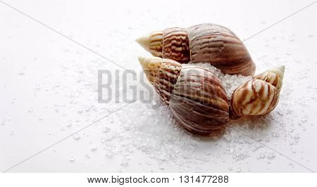 cockleshells, cone, white, white colors background, brown and yellow colors
