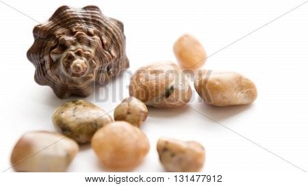cockleshells, cone, white, white colors background, stones,brown and yellow colors