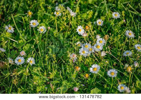 Spring meadow with flowers in Germany in summer