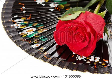 Black spanish fan and red rose with water droplets isolated on white background with clipping path