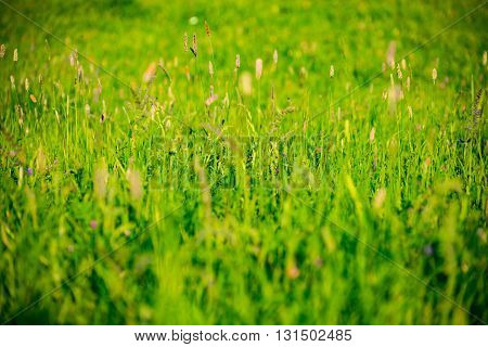 Green Meadow of Germany in late spring