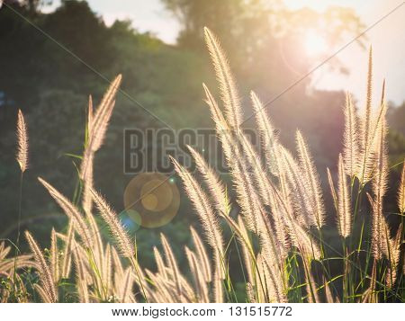 Natural blur and soft grasses with sun light for background