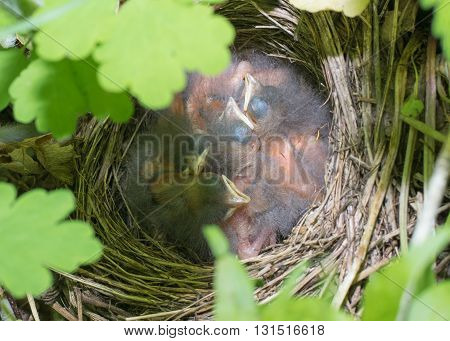 nest with chicks on the ground in the spring forest