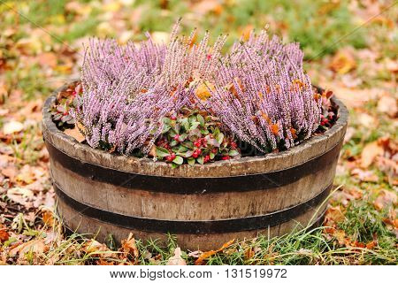 heather in the pot