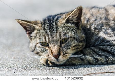 Striped cat lying on the ground relaxing