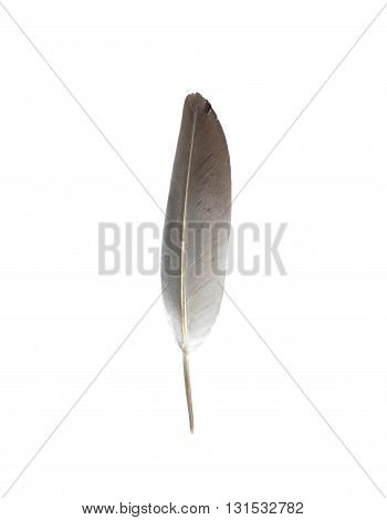 closeup feather bird isolated on white background.