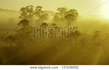 Stock Photo: Aerial sunrise with fog or mist at the treetops in the rural countryside looking moody dramatic Croajingolong National Park, Australia