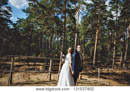 Newlyweds on the background of a beautiful pine forest. Happy and lovely