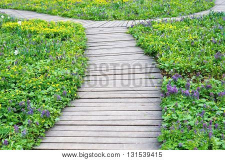 wooden walkway among the flower lawn in spring time