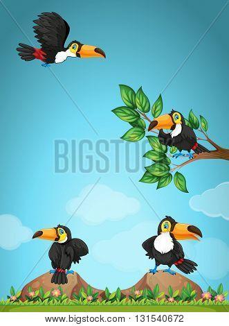 Four toucans flying in the garden illustration
