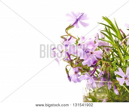 Bouquet of lilac flowers on a white background. Phloxes in a transparent can copyspace at the left selective focus
