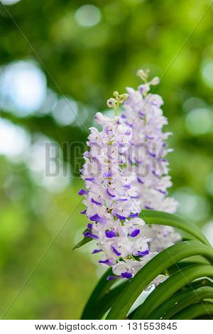 Beautiful orchid bouquet of white and blue on nature backdrop soft blur.