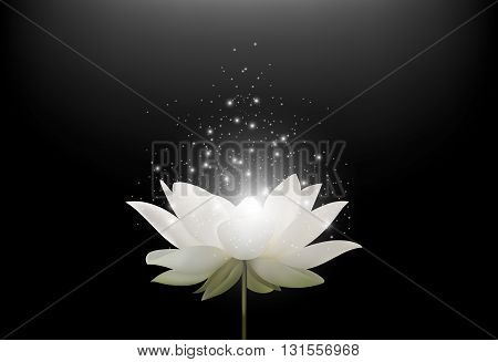 Vector illustration of Magic White Lotus flower on black background