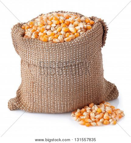 corn grains in bag isolated on white background. Corn seeds in sack. Dry uncooked corn grains for popcorn