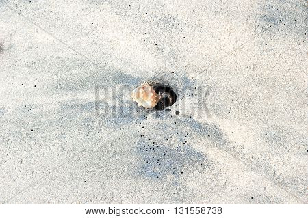 Hermit sea crab going into a hole on the sand