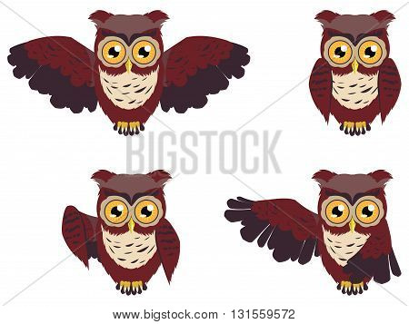 Brown Wise Owl