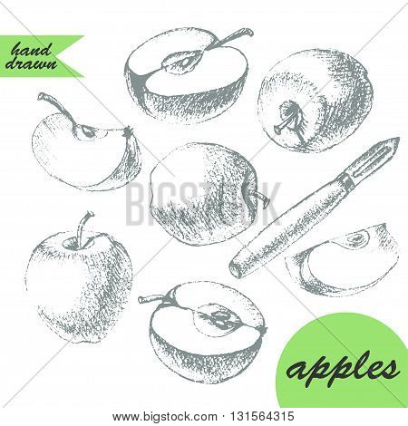Set of apples drawings. Hand drawn pencil sketch of apples apple half apple slice and apple peeler knife in grey