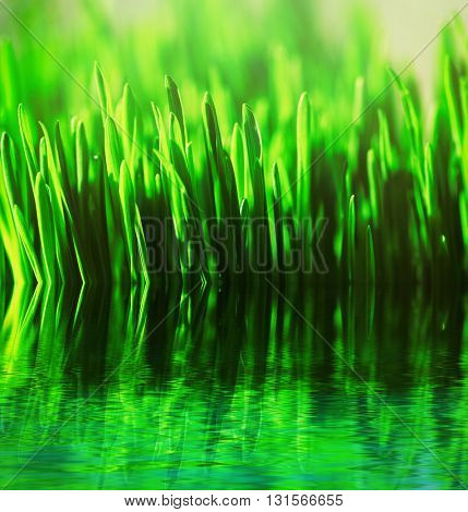 Natural background with green grass and water,  sunny day