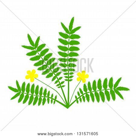 Plant with yellow flower (Argentina anserina) - vector illustration.