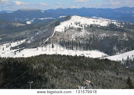 Christmas tree under the snow in the Carpathians