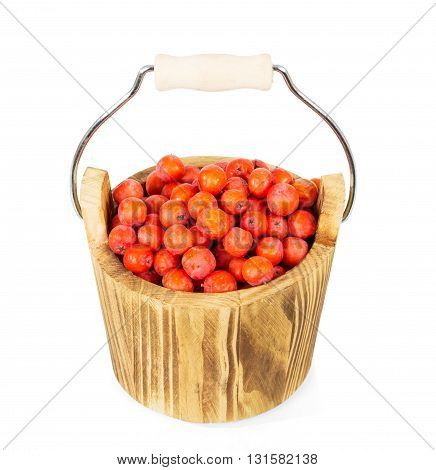 Wooden bucket with berries of mountain ash isolated on a white background.