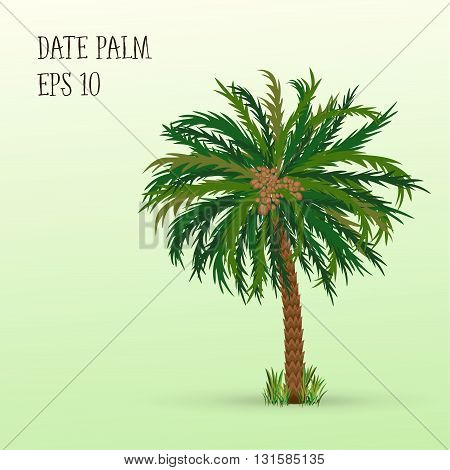 Date palm tree with ripe fruits dates. Vector illustration EPS 10