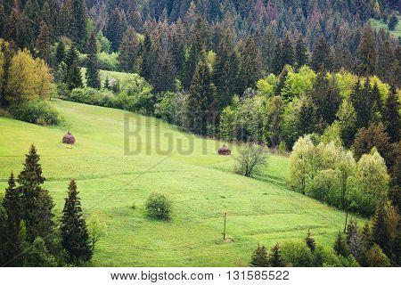 Fragment Of Mountain Pasture