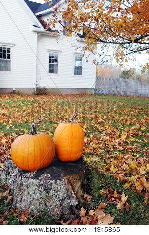 Pumpkin Scenic