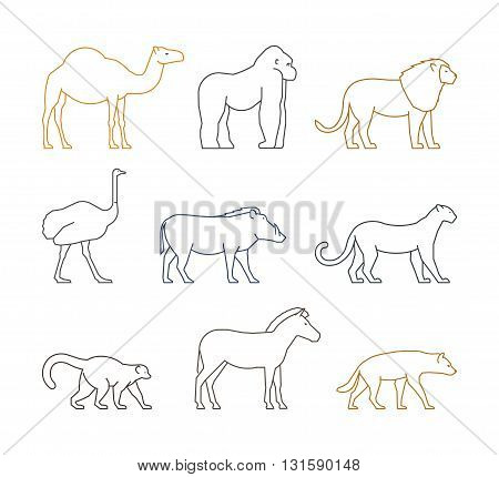 Colored vector line set of african animals. Outline silhouette dromedary gorilla and lion. Line icon ostrich warthog and leopard. Linear zebra lemur and hyena.